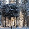Tree Hotel. Sweden.