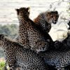 Transtrek Safaris Limited. East Africa.